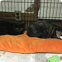 Adopt A Pet :: Linda & Harley - Bronx, NY
