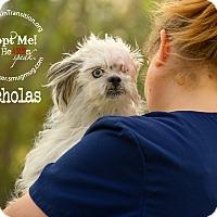 Adopt A Pet :: Nicholas - Friendswood, TX