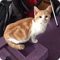 Adopt A Pet :: Blizzard - Rochester, MN