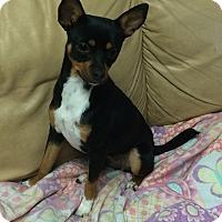 Adopt A Pet :: MINNIE - Metairie, LA