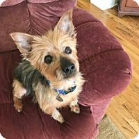 Adopt A Pet :: Whiskey - Homewood, AL