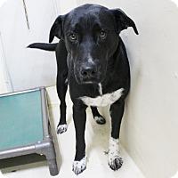 Adopt A Pet :: A19 Addyson - Odessa, TX