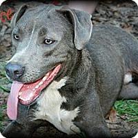 Adopt A Pet :: Deuce - Vancleave, MS