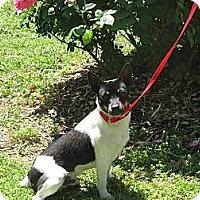 Adopt A Pet :: Squirt - Stilwell, OK