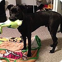 Adopt A Pet :: Ozzy - Hamilton, ON