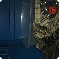 Adopt A Pet :: Pilot - Clay, NY
