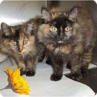 Adopt A Pet :: Thelma & Louse - McDonough, GA