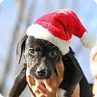 Adopt A Pet :: Shamus - Bradenton, FL