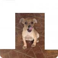 Adopt A Pet :: Chewie - Kendall, NY