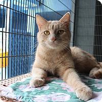 Adopt A Pet :: Sallie - Newport Beach, CA
