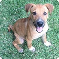 Adopt A Pet :: BUTCH - Paron, AR