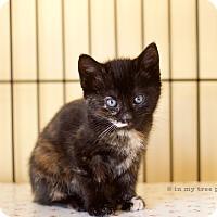 Adopt A Pet :: Sofia - Island Park, NY