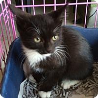 Adopt A Pet :: Oreo - Whittier, CA
