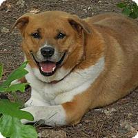 Adopt A Pet :: Sammy - Saratoga, NY