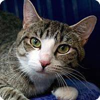 Adopt A Pet :: Cordelia - Calgary, AB