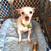 Adopt A Pet :: Bobby - ROME, NY