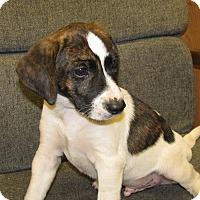 Adopt A Pet :: JD - Groton, MA