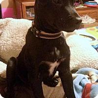 Adopt A Pet :: Espresso - Millersville, MD