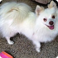 Adopt A Pet :: Prinny - Thousand Oaks, CA