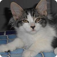 Adopt A Pet :: Lorne - North Highlands, CA