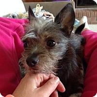 Adopt A Pet :: Rafa - Grand Rapids, MI