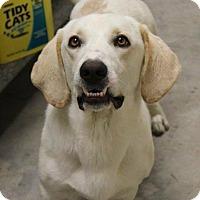 Adopt A Pet :: George-pending adoption - Manchester, CT