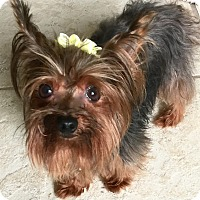 Adopt A Pet :: Sparky - St Petersburg, FL