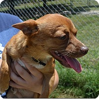 Adopt A Pet :: Mickey - Clermont, FL
