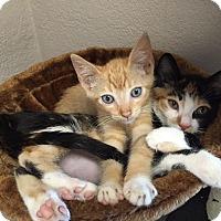 Adopt A Pet :: Ericka - Riverside, CA
