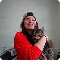Adopt A Pet :: Boots - Elyria, OH