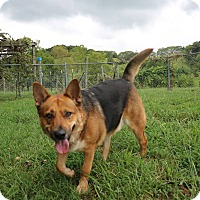 Adopt A Pet :: Max - Greeneville, TN