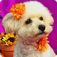 Adopt A Pet :: Pretty Penny - Irvine, CA