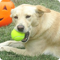 Adopt A Pet :: Emmylou - Godley, TX