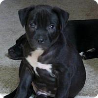 Adopt A Pet :: Jerry - Grafton, WI