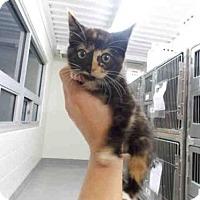 Adopt A Pet :: REECE - Jacksonville, FL