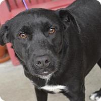 Adopt A Pet :: Cinder - Brunswick, ME