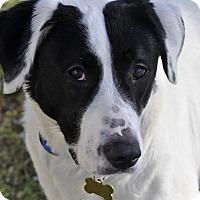 Adopt A Pet :: Tessa - Woodburn, OR