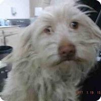 Adopt A Pet :: BABY - Hanford, CA