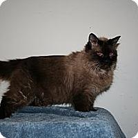 Adopt A Pet :: Ziva - Santa Rosa, CA