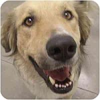 Adopt A Pet :: Midas - Phoenix, AZ