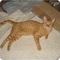 Adopt A Pet :: Calvin - Tomball, TX