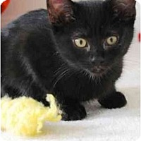 Adopt A Pet :: Jan Brady - Colmar, PA