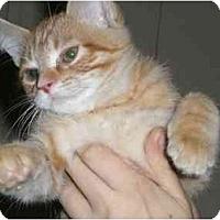 Adopt A Pet :: Randy - Lombard, IL