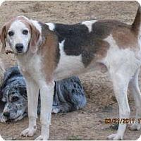 Adopt A Pet :: Mikey - Bakersville, NC