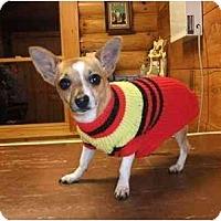 Adopt A Pet :: Penelope - Mooy, AL