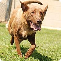 Adopt A Pet :: Honey Bun - Marietta, GA
