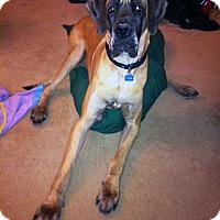 Adopt A Pet :: Thor - Courtesy Listing - Manassas, VA