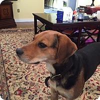 Adopt A Pet :: Henry Reuger - Richmond, VA