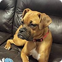 Adopt A Pet :: Piper - Arden, NC