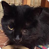 Adopt A Pet :: Botsi - Ortonville, MI